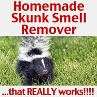 This homemade skunk smell remover is an easy recipe to make to remove skunk odor and it really works! It uses common ingredients all of us have on hand!