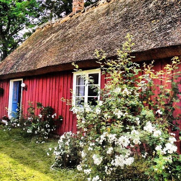 Swedish summer    http://www.fewo-stockholm.com/ferienhaus-schweden/