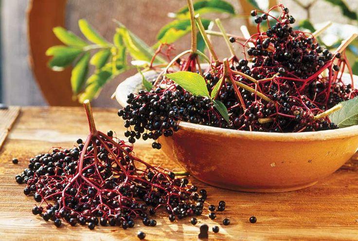 Elderberries: Grow, Cook, Heal with Elder by Margie Gibson, Mother Earth Living Oct./Nov. 2009