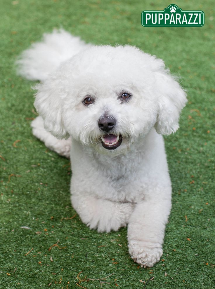 When I hear a dog being called by a commonplace or everyday kind of name like Barry or Rick, I have to admit that I always find it a little odd.I'm not sure why, and I can't fully explain it but it's like the time I met a dog called Simon it just weirded me out Read more at https://www.pupparazzi.com.au/melbourne-bayside-pet-photography-session-with-wesley/