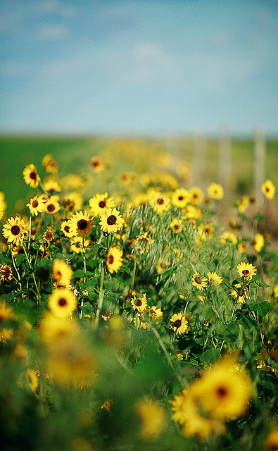 : Trees Flowers Beautiful Places, Seasons, Daisies, Photo Shared, Sunflowers Sunflowers, Flower Power, Trees Flower Beautiful Places, General Photography