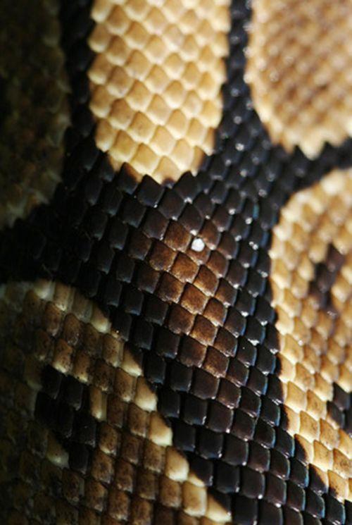 brown snake skin