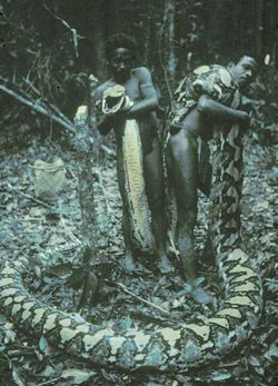 Meet the Agta, a tribe where a quarter of men have been attacked by giant snakes