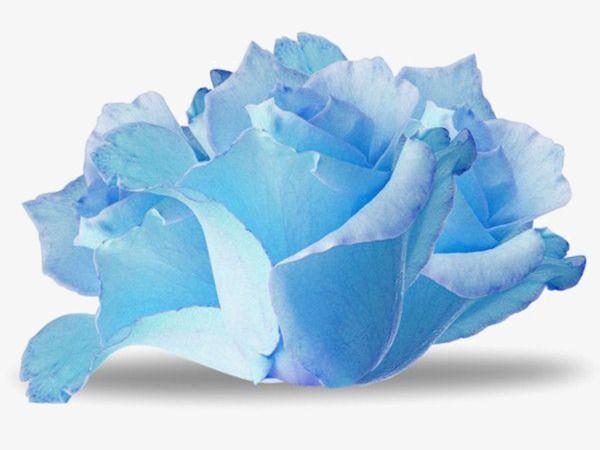 Hand Painted Watercolor Blue Paper Flowers Papel De Acuarela Flor De Paper Acuarela