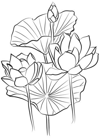 Kleurplaat 60 Sacred Lotus Nelumbo Nucifera Coloring Page Art