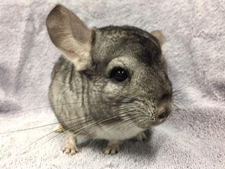 We are a non profit, no kill rabbit rescue and education organization.