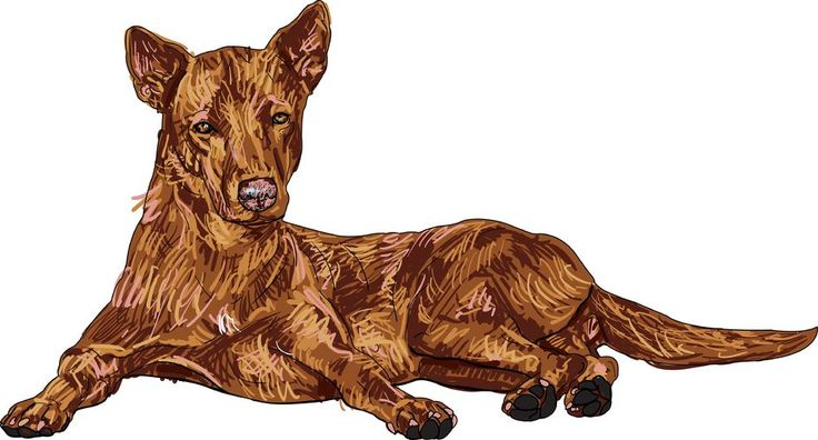 How To Paint Shaggy Fur On A Dog | www.drawing-made-easy.com | #drawing #dog