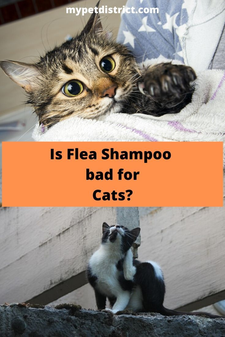 4 Best Flea Shampoos For Cats In 2020 With Images Cat Fleas Treatment Cat Fleas Flea Shampoo For Cats