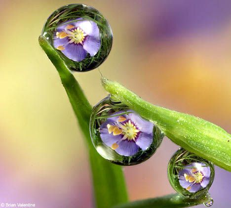 Flower reflections captured in drops of rain, beautiful!