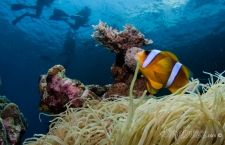 Cairns – Tips for a great day of diving on the GBR