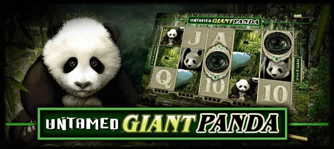 Giant Panda | Royal-Vegas