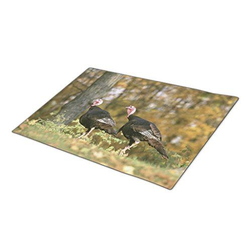 HomeTaste Decorative Door Mats A male Female Turkey Pair Photograph in Fall Outside Door Mats >>> You can get additional details at the image link.  This link participates in Amazon Service LLC Associates Program, a program designed to let participant earn advertising fees by advertising and linking to Amazon.com.