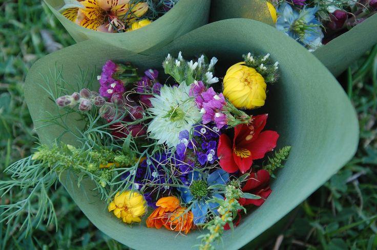 nigella, late freesia, calendula, silver beet, statice, snapdragon