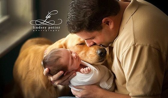Photos capture tender moments between dogs and their young families » DogHeirs | Where Dogs Are Family « Keywords: photography, babies, photographs, family