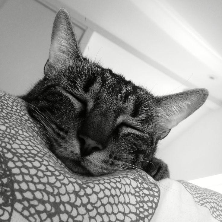 Sieste sur le lit