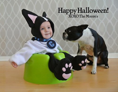 xoxocant wait to have kids so i can dress them boston terrier costumeboston terrier halloweenboston terrierschild halloween costumesfuture - Halloween Costumes In Boston