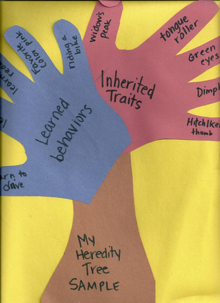 Heredity Tree; fantastic for student side of science notebook.