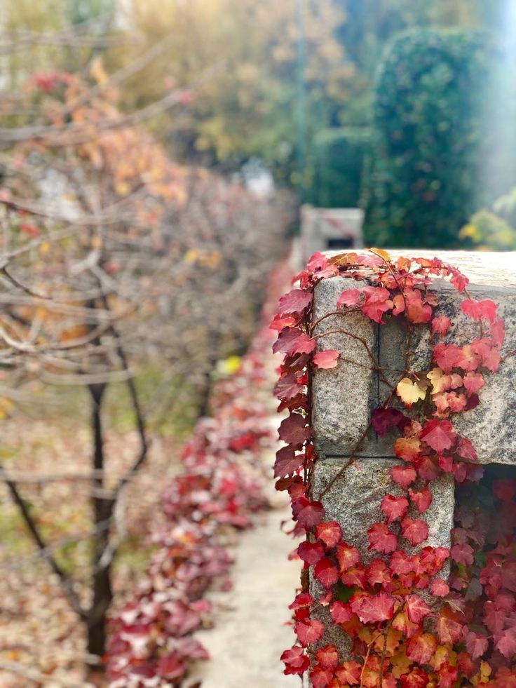 Autumn Hunza Pakistan Tourism