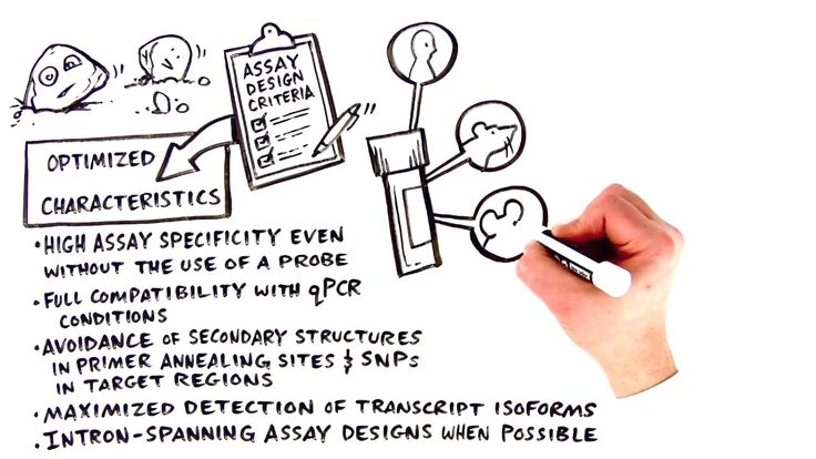 Bio-Rad - PrimePCR™ qPCR assays: primer design and validation for simplified gene ... #voiceover #whiteboard #explainer #vobynophi #thedrawshop #biorad