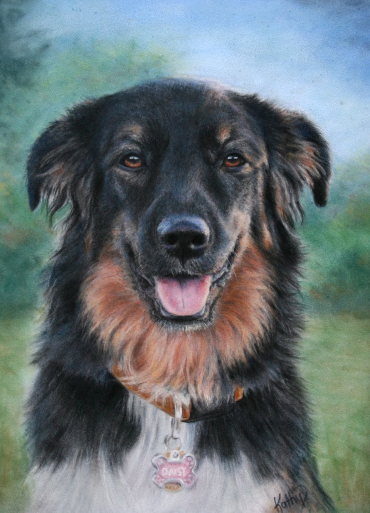 """""""Daisy""""  Pastel painting on velour paper  by Kathy Dolan"""