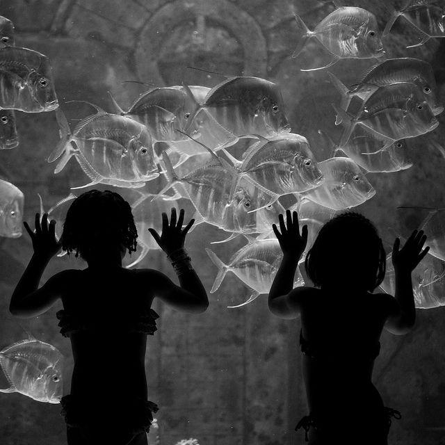 Underwater Sisters by Thomas Hawk: Inspiration, Blue, Silhouette, Aquarium, Black White, Children, Blackandwhite Photography, Kid