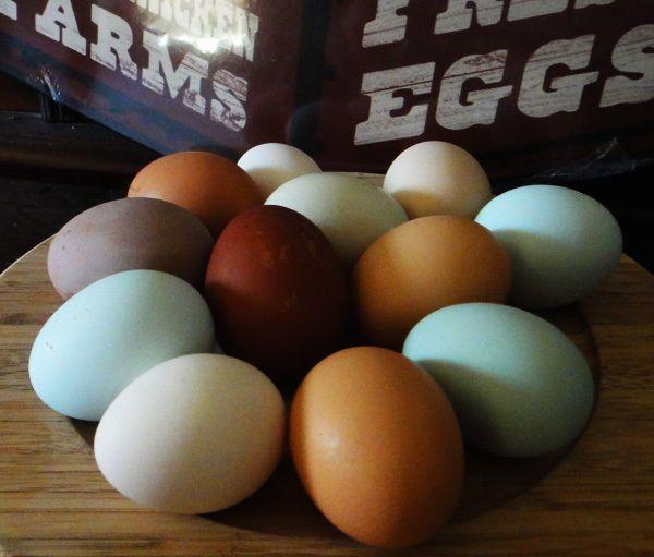10 bunte Eier meiner glücklichen Hühner keine Bruteier
