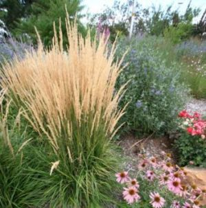 Ornamental grasses design and landscapes on pinterest for Tall grass landscape ideas