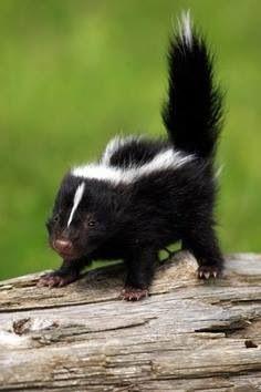 Little Stinker!
