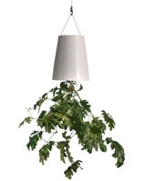 Sky planter - space saving herb planter, great for small kitchens.