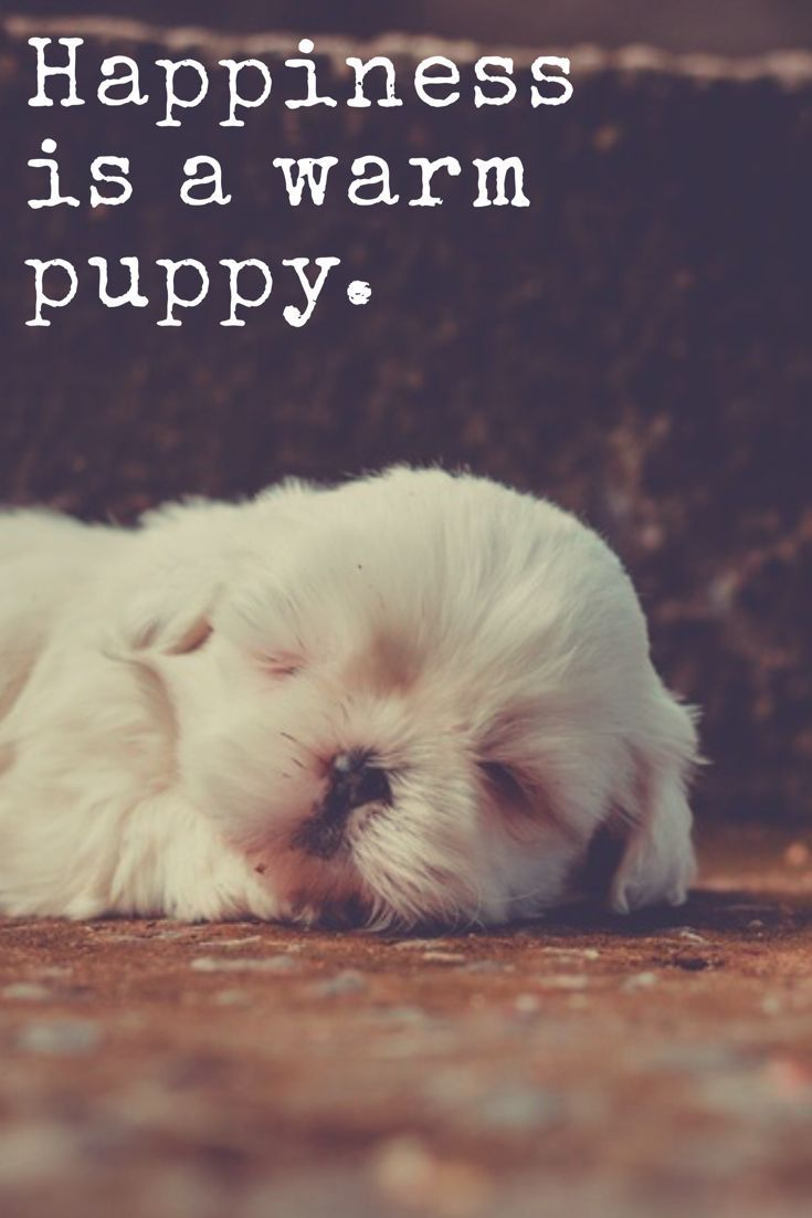puppy love Synonyms for puppy love at thesauruscom with free online thesaurus, antonyms , and definitions find descriptive alternatives for puppy love.