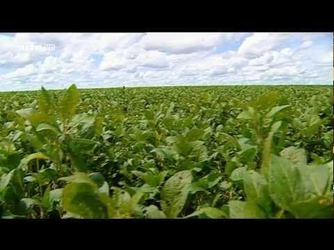 Le monde selon Monsanto [complet] [FR] [HD]