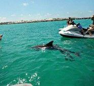 AAA Jet Ski Rental and Tours in Panama City Beach Florida