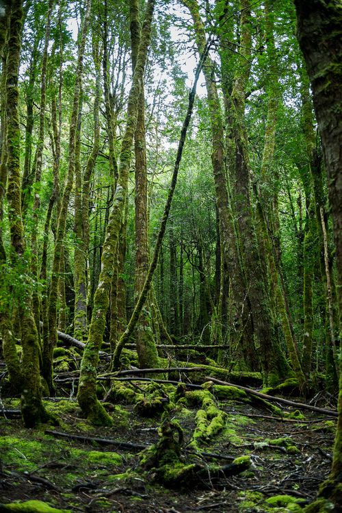 King Billy trail walk, Tasmania | Australia (by Luke Roberts)