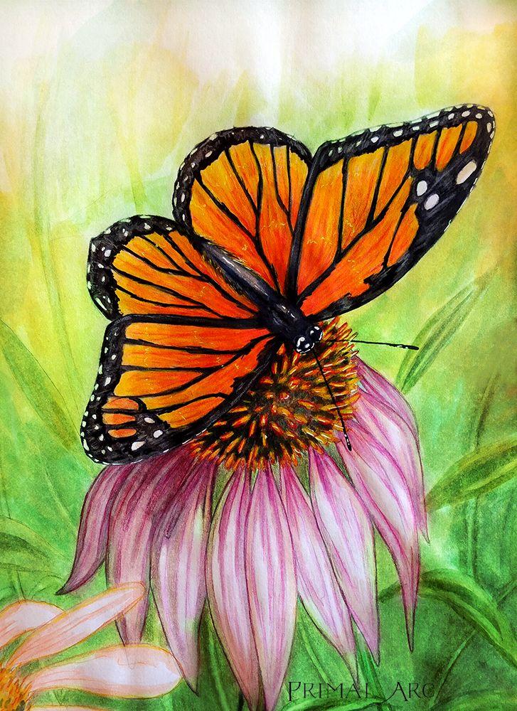 'Monarch at Rest', watercolour illustration. www.primalarc.com