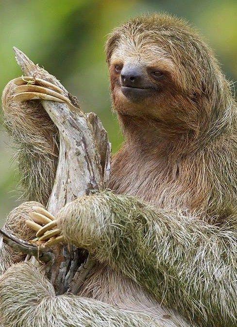 25 best ideas about amazon animals on pinterest amazon - Amazon rainforest animals wallpaper ...