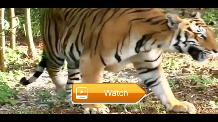 Nat Geo Wild Nature Documentary Wildlife Animal Discovery Channel Animals HD  Nat Geo Wild Nature Documentary Wildlife Animal Discovery Channel Animals HD National Geographic Documentary HD SUPER CUTE  on Pet Lovers