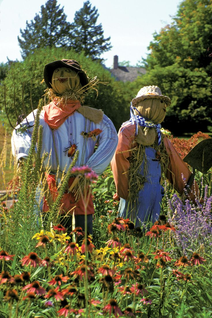 best 25 scarecrow garden ideas on pinterest flower pot