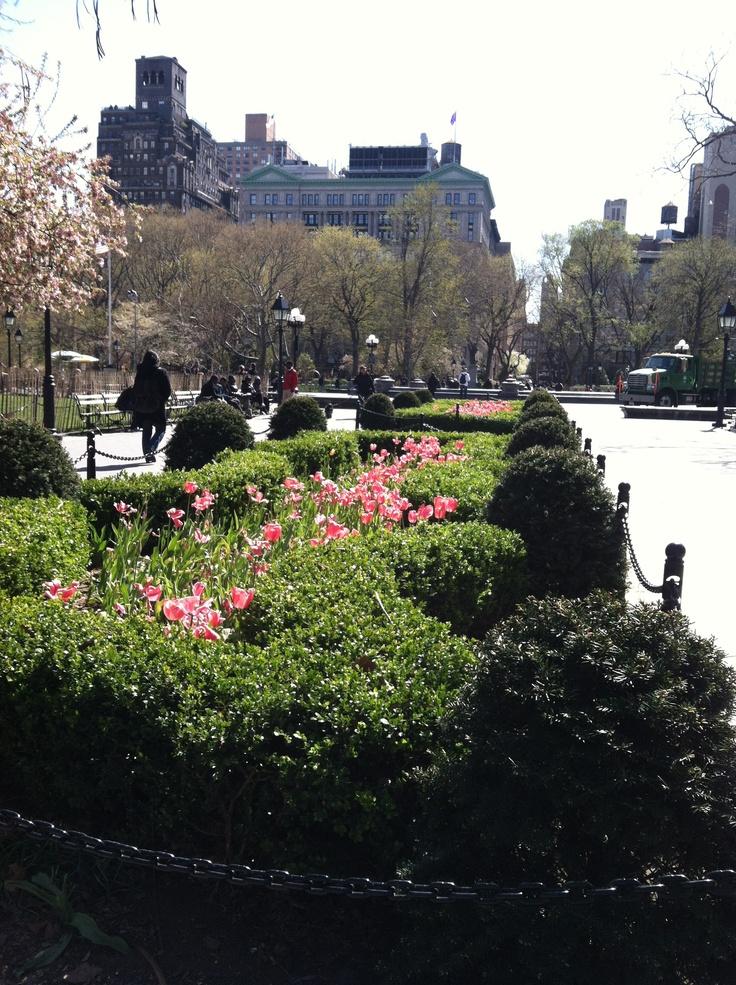Washington Square Park, spring & tulips.