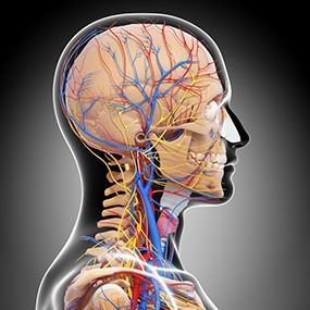 Lacunar stroke happens when blood flow to one of the small arterial vessels deep within the brain becomes blocked. Learn about symptoms, treatments, and more.