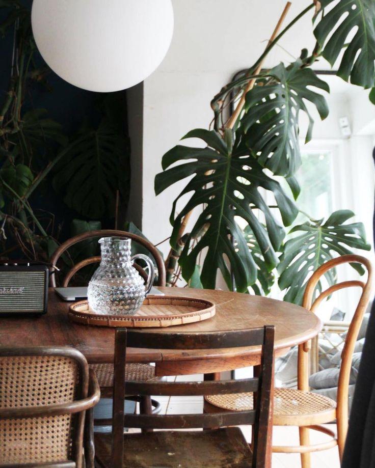 Vintage Thonet Kaffeehausstuhl mit Sitzfläche aus Rohrgeflecht. Und dazu diese Monsterablätter...