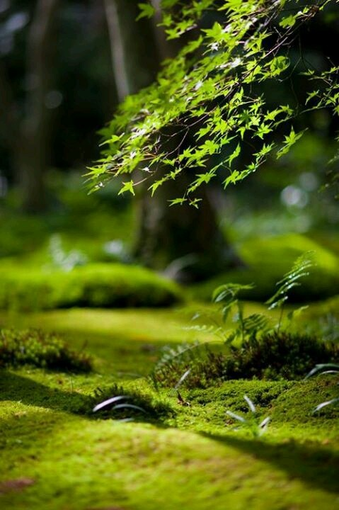 61 best Moss Lichen images on Pinterest Moss garden Nature