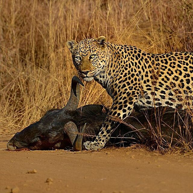 62 best pilanesberg game reserve images on pinterest game image from the photographers guide to the pilanesberg national park ebook fandeluxe Ebook collections