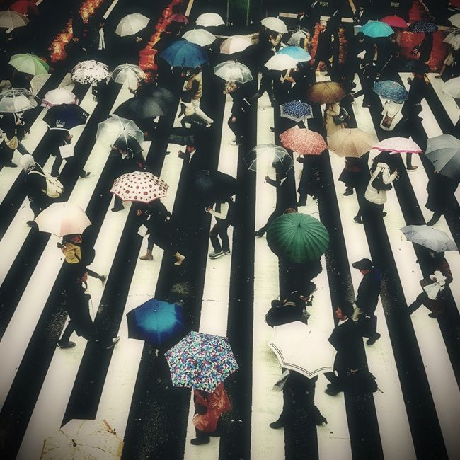 Under my umbrella eh eh eh: Rainy Day, Black And White, Colors, Tokyo Japan, Cities Life, Umbrellas Art, Stripes, Photography, Full Bloom