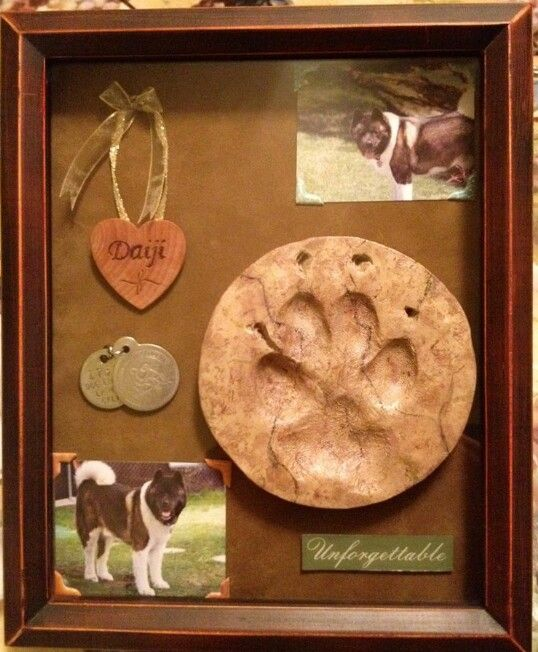 #Pet shadow box idea - a sweet way to remember and celebrate their life. ♥