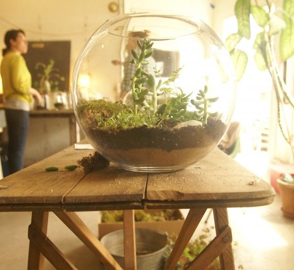 learn how to make a Terrarium! {it's sooooo easy!}