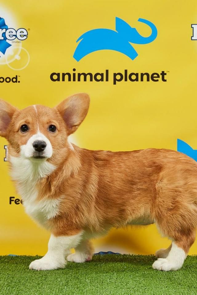 You Have To See The Starting Lineup For The Puppy Bowl Puppy Bowls Big Fluffy Dog Rescue Big Fluffy Dogs