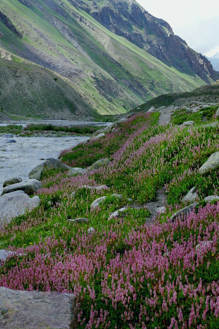 Spring in Markha Valley, Ladakh, India http://www.trekkinginladakh.com/markha-valley-trekking.html