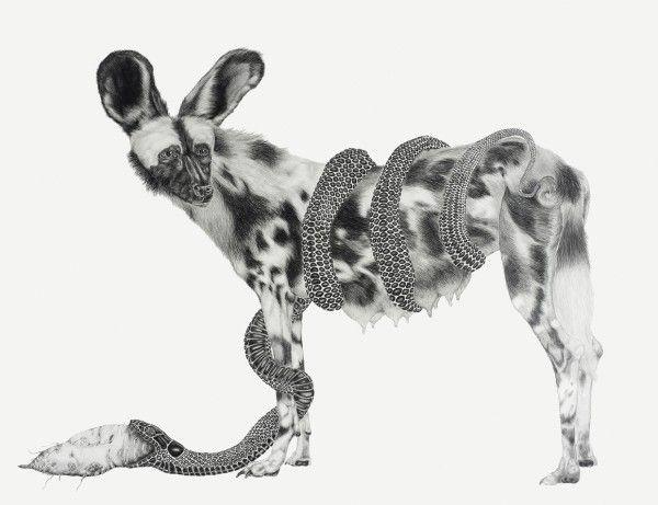 tara-tucker-animals-14