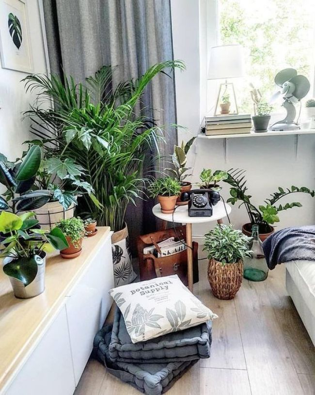 24 Indoor Gardening Ideas You Don T Want To Miss Interior Design In 2019 Pinterest House Indoor And Indoor House Plants Decor Balcony Plants Plant Decor