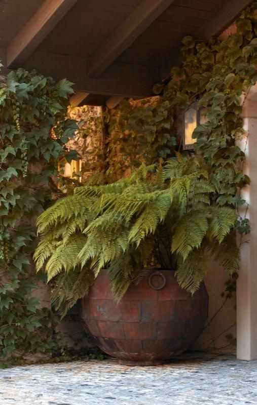 Lovely potted fern in a shady corner